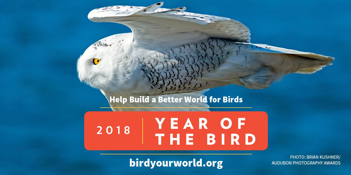 Year of the Bird image