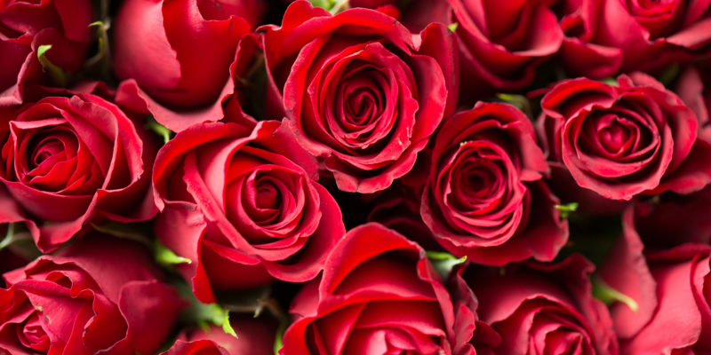 SWE to sell roses for Valentine's Day