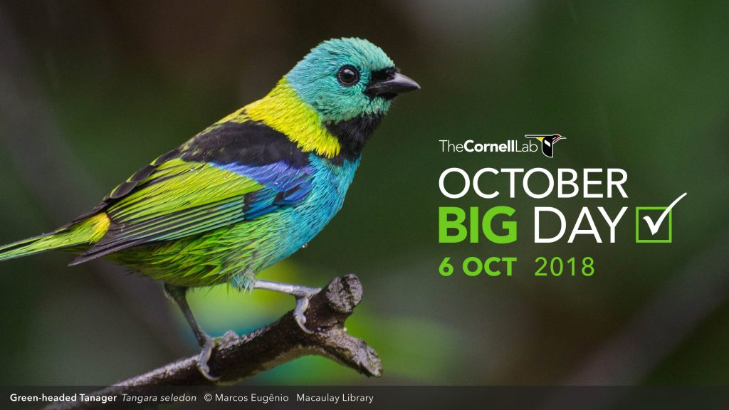 Bird with text: October Big Day