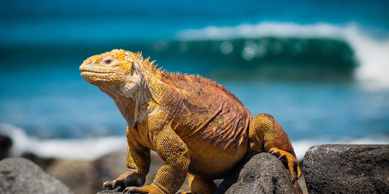 Tell students about Galapagos Islands scholarship