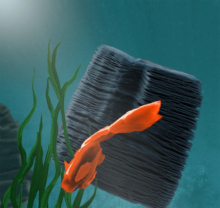 Ceramic goldfish